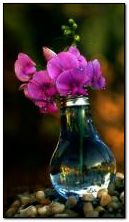 Orchids 360?640