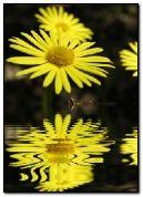 Hoa trong nước 4