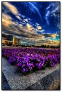 flowerbed in city