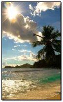 Tropic Paradise 5