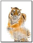 Tigar Nice