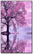 musim gugur merah muda
