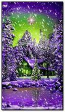 Ngôi sao mùa đông
