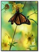 Butterfly + flower