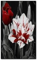 Blumen Anim