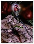 Rose & Letter