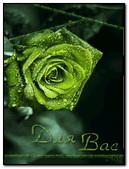 Zielona róża 3D