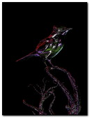 Rainbow Bird 240x320