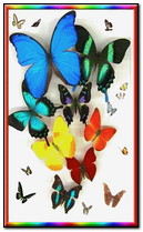 Butterfflys Couleurs
