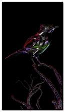 Rainbow Bird 360x640