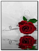 Abst Red Rose