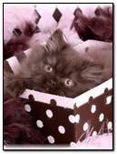 Kitten As A Gift