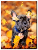 Dog With Autumn Leaf