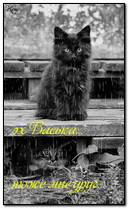 Cute Cats under the Rain