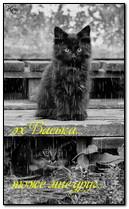 Śliczne koty pod deszczem