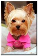 Glamourous Doggie