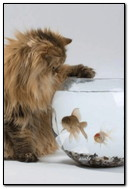 Fluffy Fish Lover)