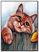 Nice Cat Looks
