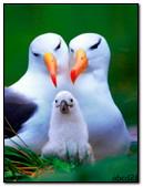 The Family Of Albatrosses