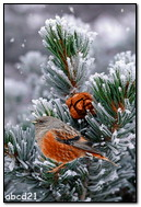 Beautiful Bird On A Pine