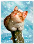 Cat Under Snow