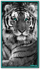 Чорний тигр