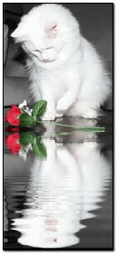 Güzel Yavru Kedi Ve Gül