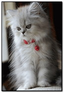 Güzel yavru kedi