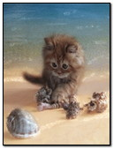 Kitten On The Sea Shore