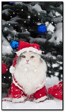 عيد الميلاد القط