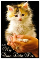 The Cat In The Palm Of Your Hand