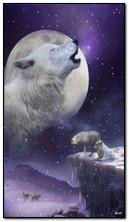 Волк Зима
