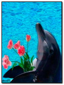 Dolphin With Tulips