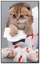 Yavru kedi animasyon