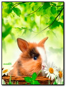 Bunny In A Basket And Daisies