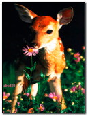 A Small Deer Eating A Flower
