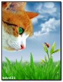 Cat And Ladybug