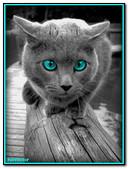 Animal Gato