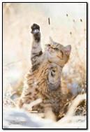 Yavru kedi kar taneleri yakalar