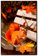 Autumn Squarelle