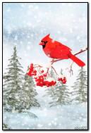 हिवाळी पक्षी