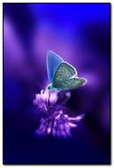Animasyonlu Kelebek