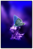 Anim Butterfly