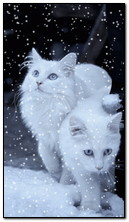 Gatti bianchi