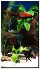 Aquarium 360x640