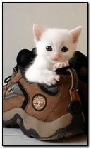 mèo con trắng