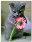 Beautiful Kiten And Flower
