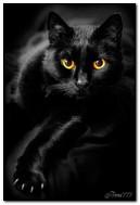 काळी मांजर