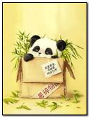 Panda As A Gift