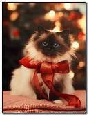 Kitty With Red Bow
